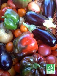 chambre-hote-nature-les3vignobles-legumes2