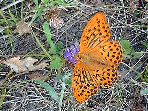 chambre-hote-nature-les3vignobles-papillon