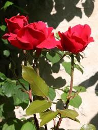 chambre-hote-nature-les3vignobles-roses